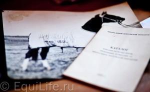 Псковский к/з: кто виноват и что делать? - фото IMG_0381_wm-300x184, главная Интервью Разное , конный журнал EquiLIfe