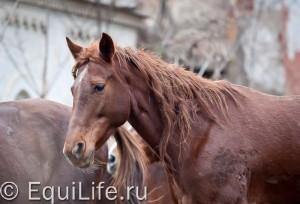 Волышово: лошади и старинная усадьба - фото IMG_0418_wm-300x204, главная Конные истории Конюшня Разное , конный журнал EquiLIfe