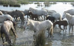 Жеребцы, кобылы и социум - фото 12_wm1-300x187, главная Поведение лошади Содержание лошади Фото , конный журнал EquiLIfe