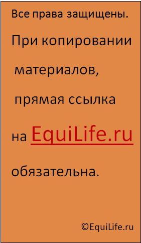 Виктория Борисова - фото copiright2, , конный журнал EquiLIfe