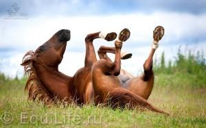 Натурально, Хильтруд Штрассер - фото _wm-300x187, главная Здоровье лошади Копыта Содержание лошади , конный журнал EquiLIfe