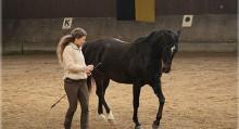Фото: horse-in-balance.com