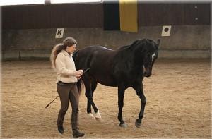 Сюзан Лохас в 2013 - фото 29_Browny_liegt2-300x197, Новости , конный журнал EquiLIfe