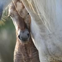 Лошади Камарга - фото DSC_9133_wm-200x200, главная Поведение лошади Разное Фото , конный журнал EquiLIfe