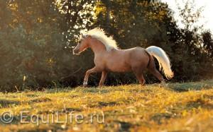 Контакты - фото PSV_5081-1_wm-300x187, , конный журнал EquiLIfe