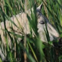 Лошади Камарга - фото PSV_5881_wm-200x200, главная Поведение лошади Разное Фото , конный журнал EquiLIfe