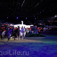 Фоторепортаж: Эквитана HOП TOП шоу «FESTIVALLO» - фото IMG_2358_resize_wm-200x200, главная Разное События Фото , конный журнал EquiLIfe