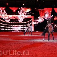 Фоторепортаж: Эквитана HOП TOП шоу «FESTIVALLO» - фото IMG_2380_resize_wm-200x200, главная Разное События Фото , конный журнал EquiLIfe