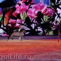 Фоторепортаж: Эквитана HOП TOП шоу «FESTIVALLO» - фото IMG_2457_resize_wm-200x200, главная Разное События Фото , конный журнал EquiLIfe