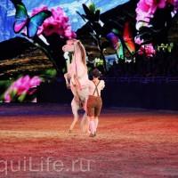 Фоторепортаж: Эквитана HOП TOП шоу «FESTIVALLO» - фото IMG_2475_resize_wm-200x200, главная Разное События Фото , конный журнал EquiLIfe