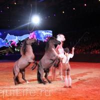 Фоторепортаж: Эквитана HOП TOП шоу «FESTIVALLO» - фото IMG_2486_resize_wm-200x200, главная Разное События Фото , конный журнал EquiLIfe