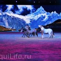 Фоторепортаж: Эквитана HOП TOП шоу «FESTIVALLO» - фото IMG_2494_resize_wm-200x200, главная Разное События Фото , конный журнал EquiLIfe