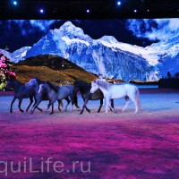 Фоторепортаж: Эквитана HOП TOП шоу «FESTIVALLO» - фото IMG_2502_resize_wm-200x200, главная Разное События Фото , конный журнал EquiLIfe