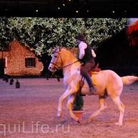 Фоторепортаж: Эквитана HOП TOП шоу «FESTIVALLO» - фото IMG_2539_resize_wm-200x200, главная Разное События Фото , конный журнал EquiLIfe