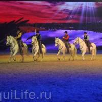 Фоторепортаж: Эквитана HOП TOП шоу «FESTIVALLO» - фото IMG_2723_resize_wm-200x200, главная Разное События Фото , конный журнал EquiLIfe