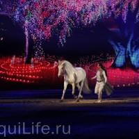 Фоторепортаж: Эквитана HOП TOП шоу «FESTIVALLO» - фото IMG_2866_resize_wm-200x200, главная Разное События Фото , конный журнал EquiLIfe