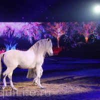 Фоторепортаж: Эквитана HOП TOП шоу «FESTIVALLO» - фото IMG_2870_resize_wm-200x200, главная Разное События Фото , конный журнал EquiLIfe