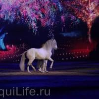 Фоторепортаж: Эквитана HOП TOП шоу «FESTIVALLO» - фото IMG_2876_resize_wm-200x200, главная Разное События Фото , конный журнал EquiLIfe