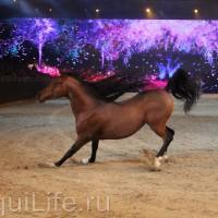 Фоторепортаж: Эквитана HOП TOП шоу «FESTIVALLO» - фото IMG_2898_resize_wm-200x200, главная Разное События Фото , конный журнал EquiLIfe