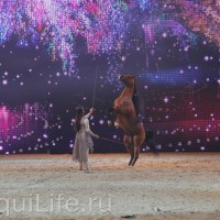 Фоторепортаж: Эквитана HOП TOП шоу «FESTIVALLO» - фото IMG_2900_resize_wm-200x200, главная Разное События Фото , конный журнал EquiLIfe