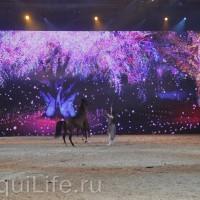 Фоторепортаж: Эквитана HOП TOП шоу «FESTIVALLO» - фото IMG_2909_resize_wm-200x200, главная Разное События Фото , конный журнал EquiLIfe