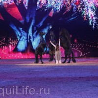 Фоторепортаж: Эквитана HOП TOП шоу «FESTIVALLO» - фото IMG_2965_resize_wm-200x200, главная Разное События Фото , конный журнал EquiLIfe