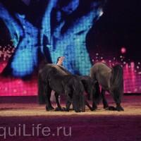 Фоторепортаж: Эквитана HOП TOП шоу «FESTIVALLO» - фото IMG_2967_resize_wm-200x200, главная Разное События Фото , конный журнал EquiLIfe