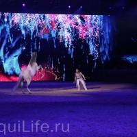 Фоторепортаж: Эквитана HOП TOП шоу «FESTIVALLO» - фото IMG_2986_resize_wm-200x200, главная Разное События Фото , конный журнал EquiLIfe