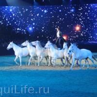 Фоторепортаж: Эквитана HOП TOП шоу «FESTIVALLO» - фото IMG_3030_resize_wm-200x200, главная Разное События Фото , конный журнал EquiLIfe
