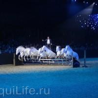 Фоторепортаж: Эквитана HOП TOП шоу «FESTIVALLO» - фото IMG_3039_resize_wm-200x200, главная Разное События Фото , конный журнал EquiLIfe