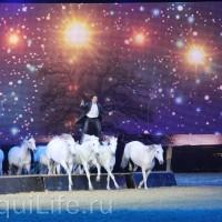 Фоторепортаж: Эквитана HOП TOП шоу «FESTIVALLO» - фото IMG_3051_resize_wm-200x200, главная Разное События Фото , конный журнал EquiLIfe