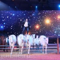 Фоторепортаж: Эквитана HOП TOП шоу «FESTIVALLO» - фото IMG_3059_resize_wm-200x200, главная Разное События Фото , конный журнал EquiLIfe