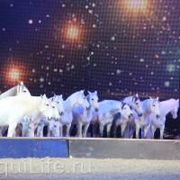 Фоторепортаж: Эквитана HOП TOП шоу «FESTIVALLO» - фото IMG_3064_resize_wm-200x200, главная Разное События Фото , конный журнал EquiLIfe