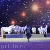 Фоторепортаж: Эквитана HOП TOП шоу «FESTIVALLO» - фото IMG_3066_resize_wm-200x200, главная Разное События Фото , конный журнал EquiLIfe