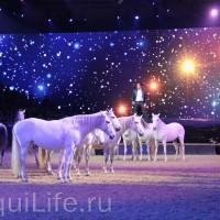 Фоторепортаж: Эквитана HOП TOП шоу «FESTIVALLO» - фото IMG_3073_resize_wm-200x200, главная Разное События Фото , конный журнал EquiLIfe