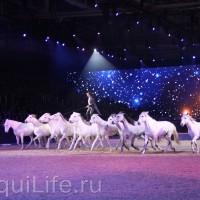 Фоторепортаж: Эквитана HOП TOП шоу «FESTIVALLO» - фото IMG_3075_resize_wm-200x200, главная Разное События Фото , конный журнал EquiLIfe