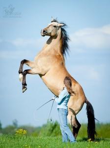 Работа на свободе. Семинар в СПб. - фото YFhzthaV0BI-224x300, Новости , конный журнал EquiLIfe