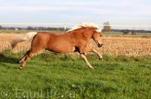 Расслабление - не значит вялость - фото 34_wm-300x197, главная Тренинг , конный журнал EquiLIfe