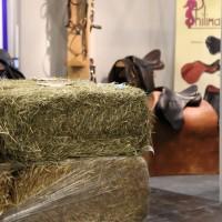 Фоторепортаж: Эквитана, картинки с выставки - фото IMG_020_wm-200x200, главная Разное События Фото , конный журнал EquiLIfe