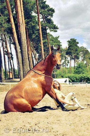 Анита Крылова: идея видеосоревнований возникла спонтанно - фото mcPZex_XbFU_wm, главная Интервью Тренинг , конный журнал EquiLIfe