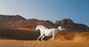 Международный конкурс фотохудожников «ЭквиФото» - фото -экрана-2013-07-15-в-16.49.36_wm-300x159, Новости , конный журнал EquiLIfe