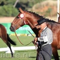 Фестиваль лошадей породы лузитано в Португалии - фото _wm-200x200, главная Разное События Фото , конный журнал EquiLIfe