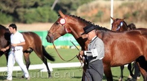 Фестиваль лошадей породы лузитано в Португалии - фото _wm-300x166, главная Разное События Фото , конный журнал EquiLIfe