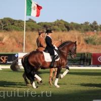 Фестиваль лошадей породы лузитано в Португалии - фото 10_wm-200x200, главная Разное События Фото , конный журнал EquiLIfe