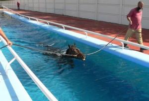 Гидротерапия   для   лошадей  - фото 12517_640-300x205, главная Здоровье лошади Тренинг , конный журнал EquiLIfe
