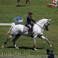 Фестиваль лошадей породы лузитано в Португалии - фото 15_wm-200x200, главная Разное События Фото , конный журнал EquiLIfe