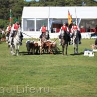 Фестиваль лошадей породы лузитано в Португалии - фото 17_wm-200x200, главная Разное События Фото , конный журнал EquiLIfe