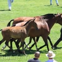 Фестиваль лошадей породы лузитано в Португалии - фото 1_wm-200x200, главная Разное События Фото , конный журнал EquiLIfe