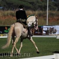 Фестиваль лошадей породы лузитано в Португалии - фото 25_wm-200x200, главная Разное События Фото , конный журнал EquiLIfe
