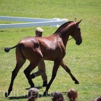 Фестиваль лошадей породы лузитано в Португалии - фото 3_wm-200x200, главная Разное События Фото , конный журнал EquiLIfe